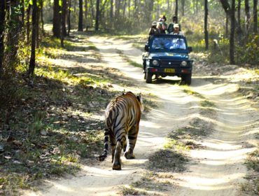 voyage-safari-a-travers-le-parc-national-de-kanha-jungle_safari_kanha_national_park-httpwww-label-mademoiselle-fr