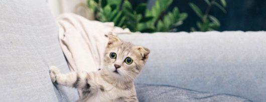 les-chabadas-la-bande-de-chats-de-daniel-picouly