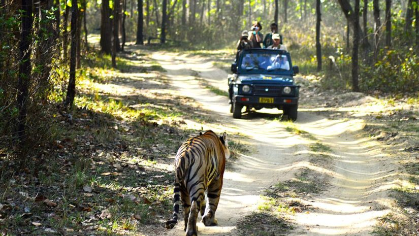 voyage-safari-a-travers-le-parc-national-de-kanha-jungle_safari_kanha_national_park-httpwww-label-mademoiselle-fr