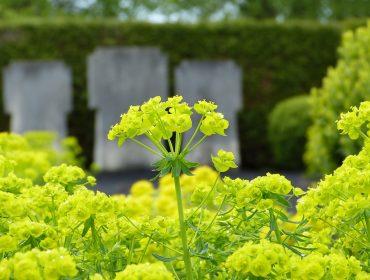 Les plantes pour cimetières ont-elles des significations